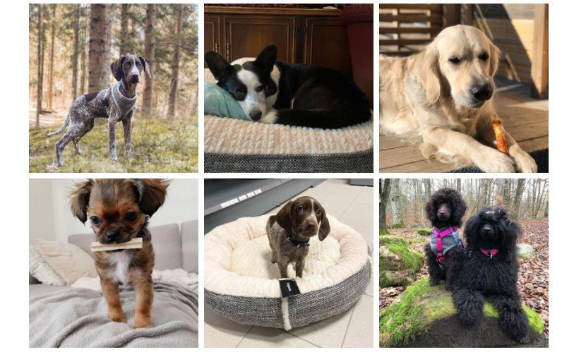 Dogman Community