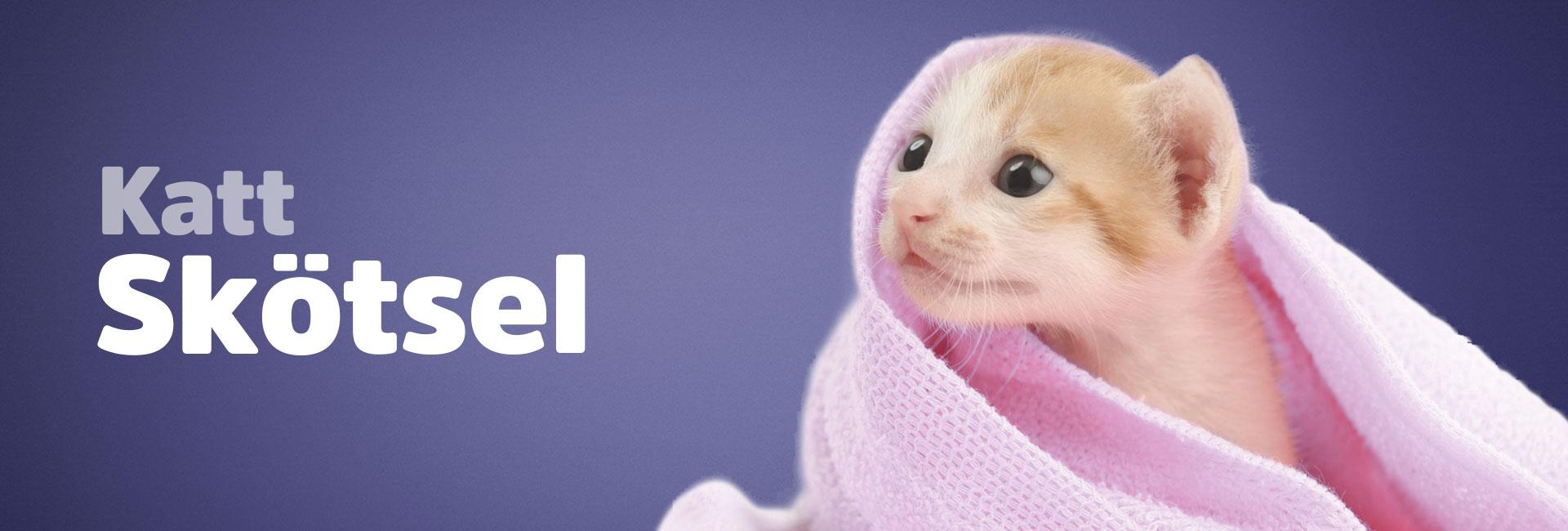 Kattskötsel