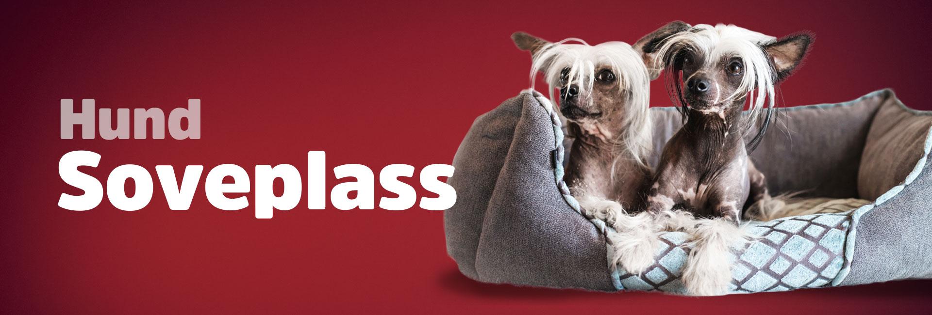 Hundesenger og madrasser