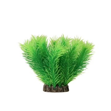 Aquael Dekorväxt Mayaca Grønn S 10cm