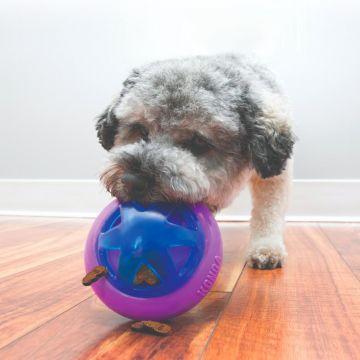 KONG Aktiveringsleksak Hopz Ball Flerfärgad S 11cm