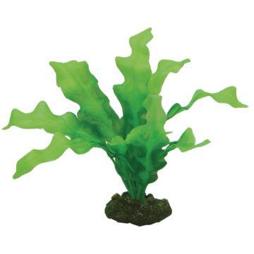 Hobby Dekorväxt Echinodrus Grön 20cm