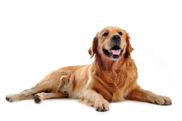 Borsta tänderna på hunden - vi guidar er hur!