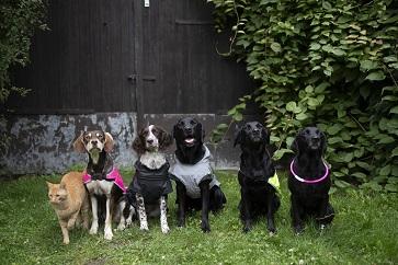 Beskytt din beste venn sitt liv – Bruk hunderefleks og blink i mørket!