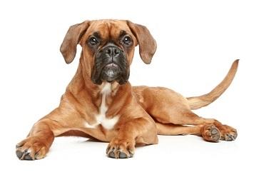 Klippa klorna på sin hund - så här gör du!
