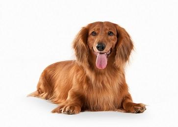 Hva prater din hund om?