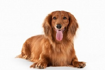 Vad pratar din hund om?