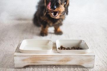 Välja rätt hundfoder - så här gör du!