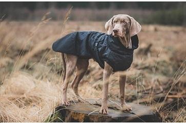 Så väljer du rätt hundkläder efter din hunds behov