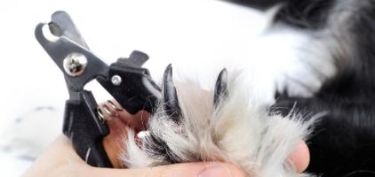 Slik klipper du klørne på din hund – Vi gir deg tips til hvordan!