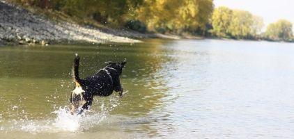 Sommar med hund