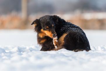 Fryser hundar om tassarna?