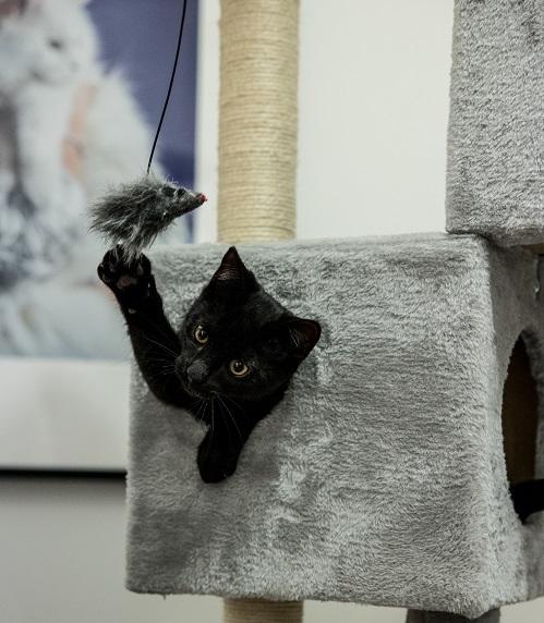 Kattungen Albert önskar lycka till