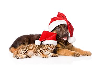 god jul og et godt nytt år