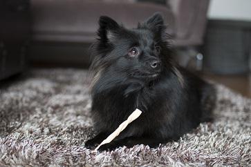 Anpassa hundtugget efter din hunds behov