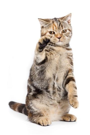 Ha tålamod när två katter introduceras till varandra