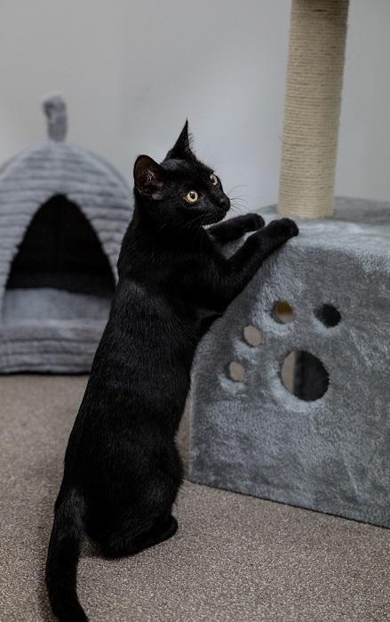 Kattungen Albert med sitt klösträd