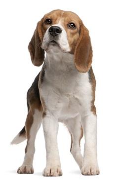 Klippa klor på sin hund