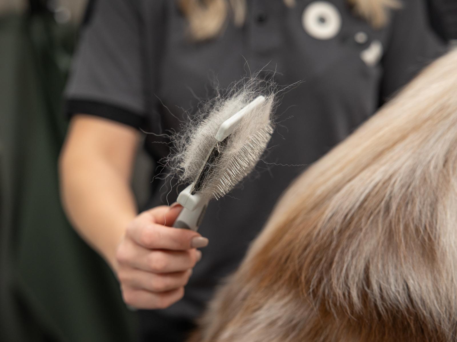 Borsta igenom hundens päls noggrant innan badet och se till att reda ut eventuella tovor
