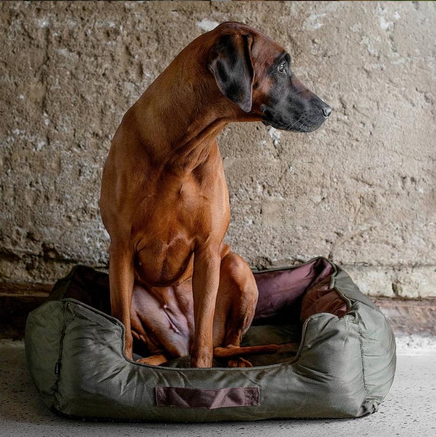 hundbädd Dogman