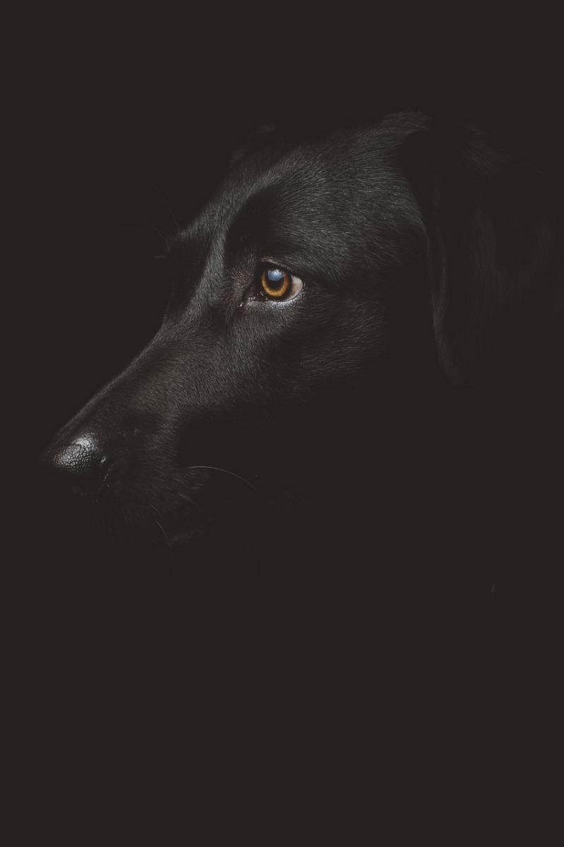 hund i mörkret