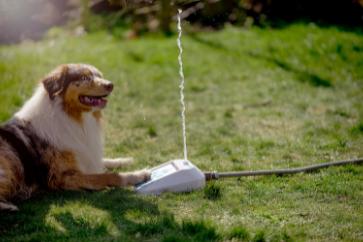 Hund med fontän