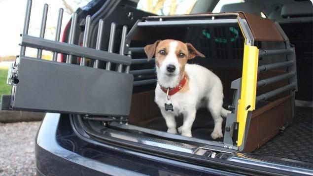 Mimsafe Variocage med liten hund i bilen