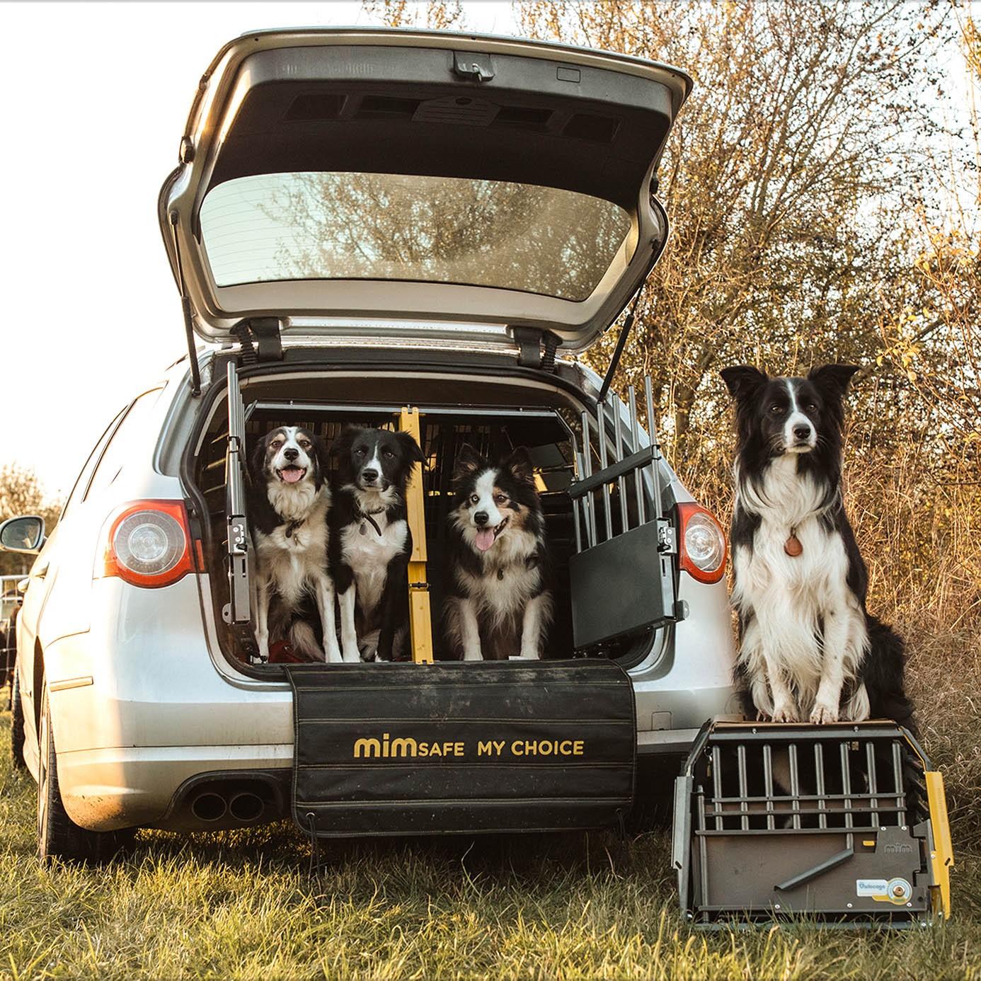 Glada hundar med Mimsafe burar