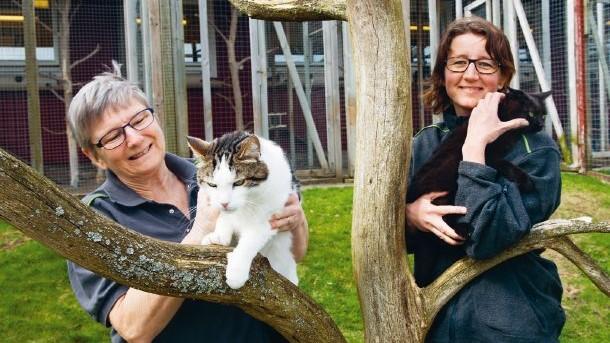 Gos med katterna på Tassalyckan i Vårgårda